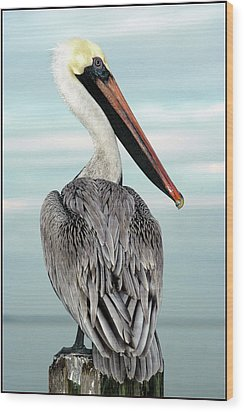 Wood Print featuring the photograph Brown Pelican by Geraldine Alexander