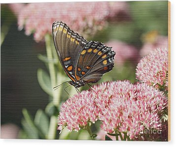 Butterfly Wood Print by Denise Pohl