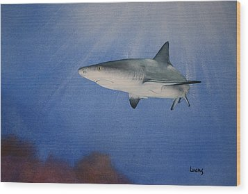 Caribbean Reef Shark 1 Wood Print by Jeff Lucas