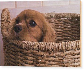Cavalier King Charles Spaniel Puppy In Basket Wood Print by Edward Fielding