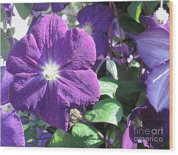 Clematis With Blazing Center Wood Print