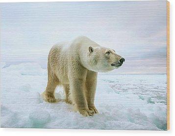 Close Up Of A Standing Polar Bear Wood Print by Peter J. Raymond