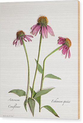 Coneflower Wood Print