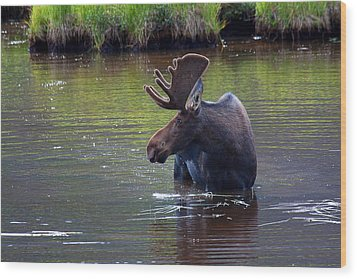 Cooling Off Wood Print by Jim Garrison
