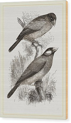 Crossbills Wood Print by Litz Collection