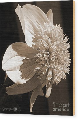 Dahlia Named Platinum Blonde Wood Print by J McCombie