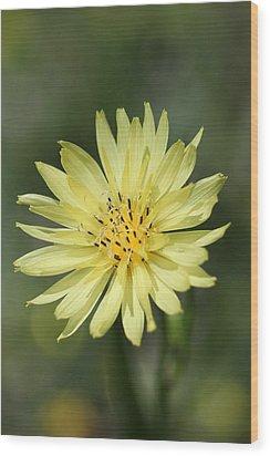 Dandelion Wood Print by Ester  Rogers