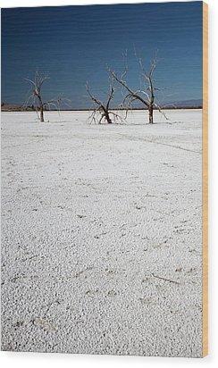 Dead Trees On Salt Flat Wood Print by Jim West