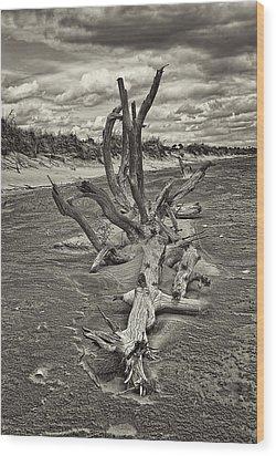 Desolate Wood Print by Marcia Colelli