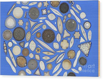 Diatoms Wood Print by Kent Wood
