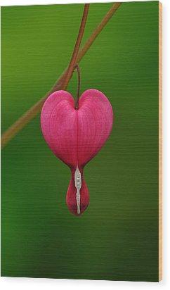 Dicentra Spectabilis Wood Print