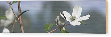 Dogwood Wood Print by Cynthia Decker
