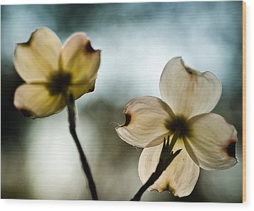 Wood Print featuring the photograph Dogwoods by Wayne Meyer