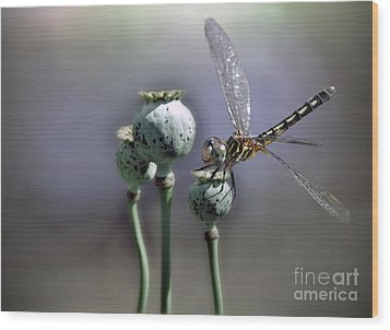 Wood Print featuring the photograph Dragonfly by Savannah Gibbs