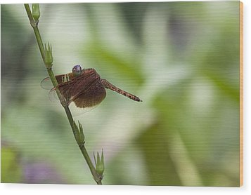 Wood Print featuring the photograph Dragonfly by Zoe Ferrie