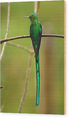 Emerald Glow Wood Print