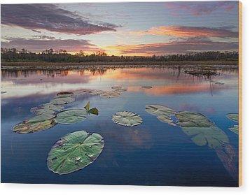 Everglades At Sunset Wood Print by Debra and Dave Vanderlaan