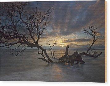 Fallen Tree Wood Print by James Roemmling
