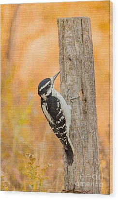 Female Hairy Woodpecker Wood Print by Linda Freshwaters Arndt