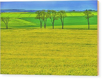 Fields Of Dreams Wood Print by Midori Chan