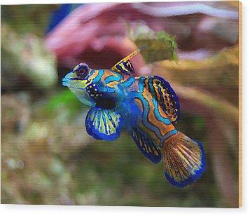 Fish Paintings Wood Print by Nicole Gardner