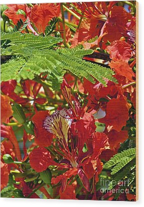 Wood Print featuring the photograph Flamboyan by Lilliana Mendez