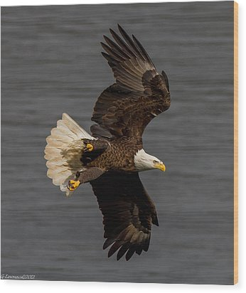 Fly By  Wood Print by Glenn Lawrence