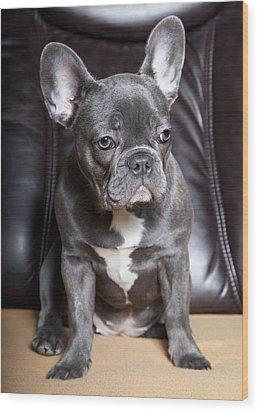French Bulldog Wood Print by Falko Follert
