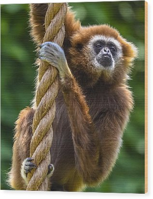 Gibbon Wood Print by Brian Stevens