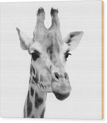 Giraffe On White Background  Wood Print