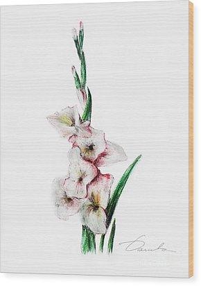 Gladiolus Wood Print by Danuta Bennett