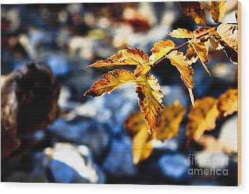 Golden Leaves Wood Print by Lawrence Burry