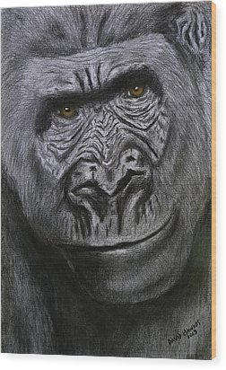 Gorilla Portrait Wood Print by David Hawkes