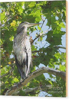 Wood Print featuring the photograph Great Blue Heron by Anita Oakley