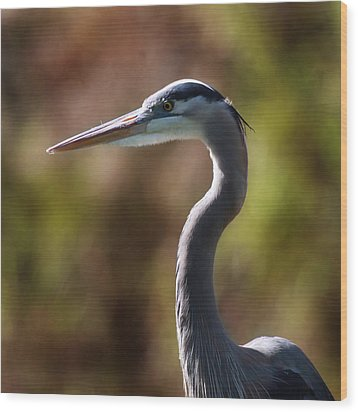 Great Blue Heron Wood Print by Joseph G Holland