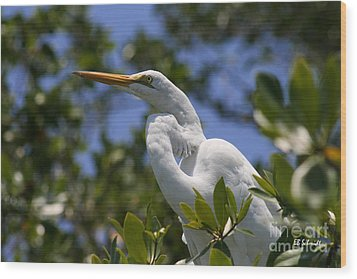 Great Egret 02 Wood Print by E B Schmidt
