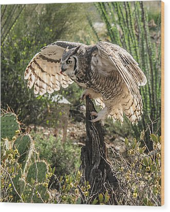 Great Horned Owl Wood Print by Tam Ryan