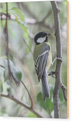 Wood Print featuring the photograph Great Tit - Parus Major by Jivko Nakev