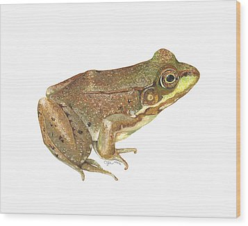 Green Frog Wood Print by Cindy Hitchcock