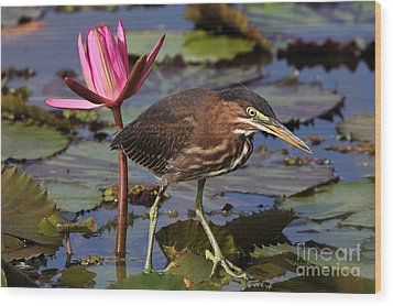 Green Heron Photo Wood Print