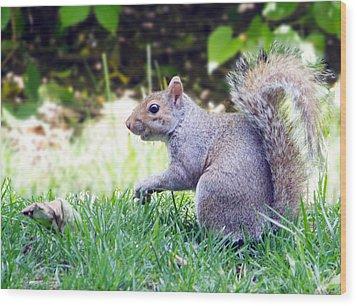 Grey Squirrel Wood Print