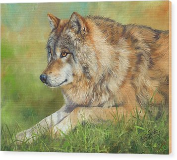 Grey Wolf Wood Print by David Stribbling