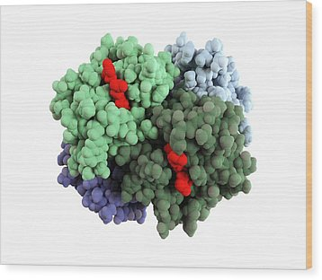 Haemoglobin Molecule Wood Print by Science Photo Library