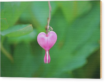 Wood Print featuring the photograph Heart On A Vine by Kathy Gibbons
