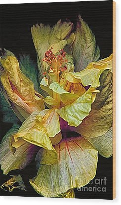 Hibiscus Wood Print by Nicola Fiscarelli