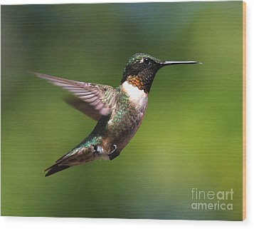 Hummer In Flight Wood Print by Douglas Stucky
