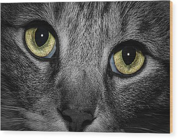 In A Cats Eye Wood Print