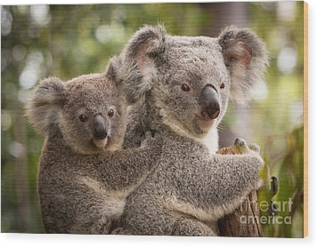 Koala And Joey Wood Print