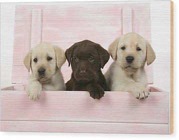 Labrador Retriever Puppies Wood Print by John Daniels