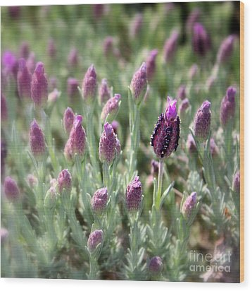 Lavender Standout Wood Print by Carol Groenen
